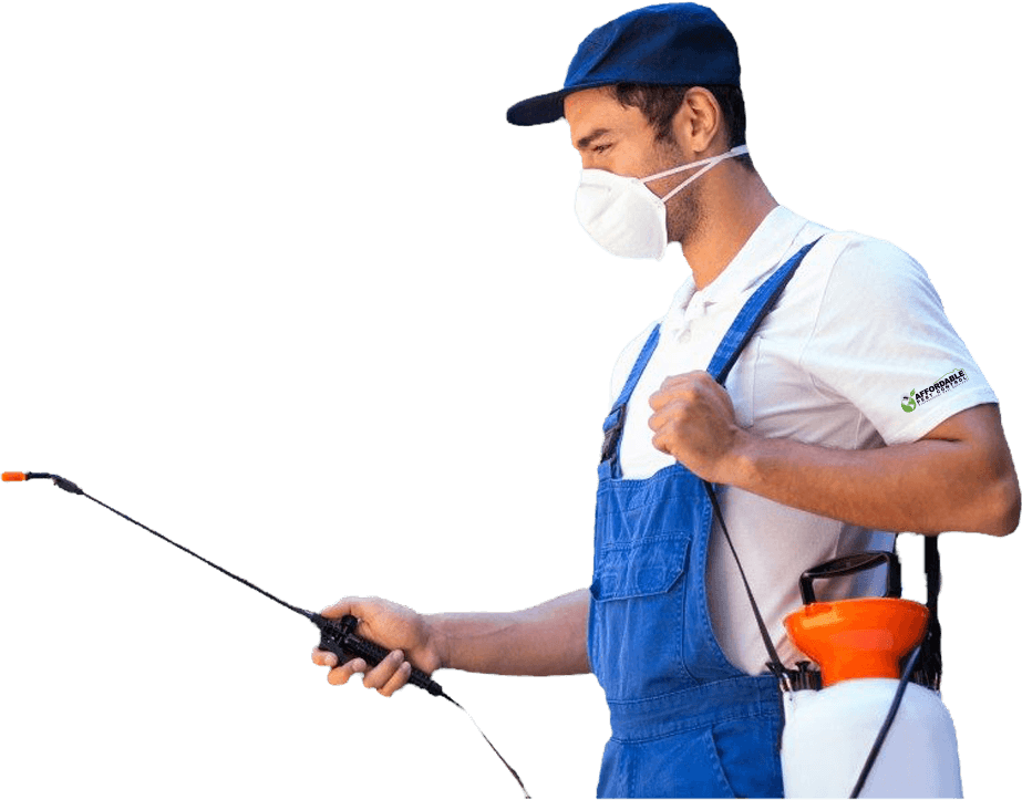 Affordable Pest Control Nowra Keeping the Shoalhaven and Illawarra pest free